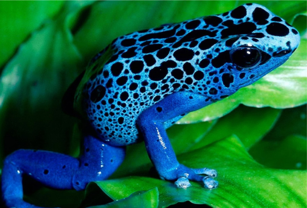 The Blue Frog in the EEG